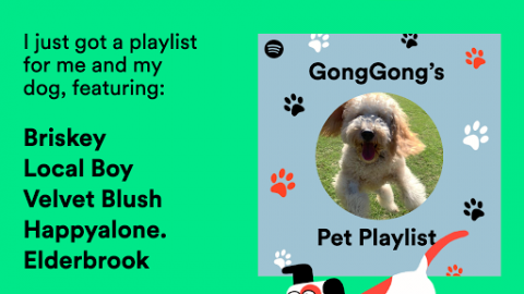 Spotify cria playlists que acalmam pets